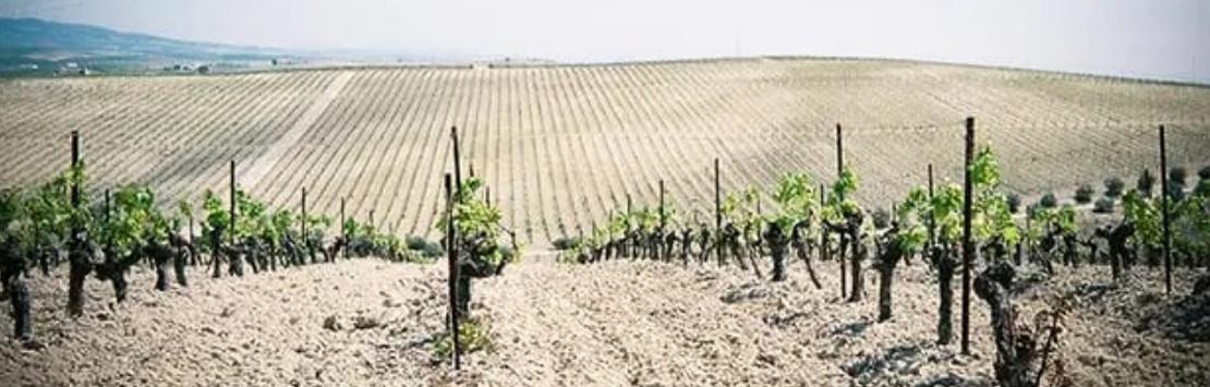 The Spanish Hamper Sherry wine from Jerez
